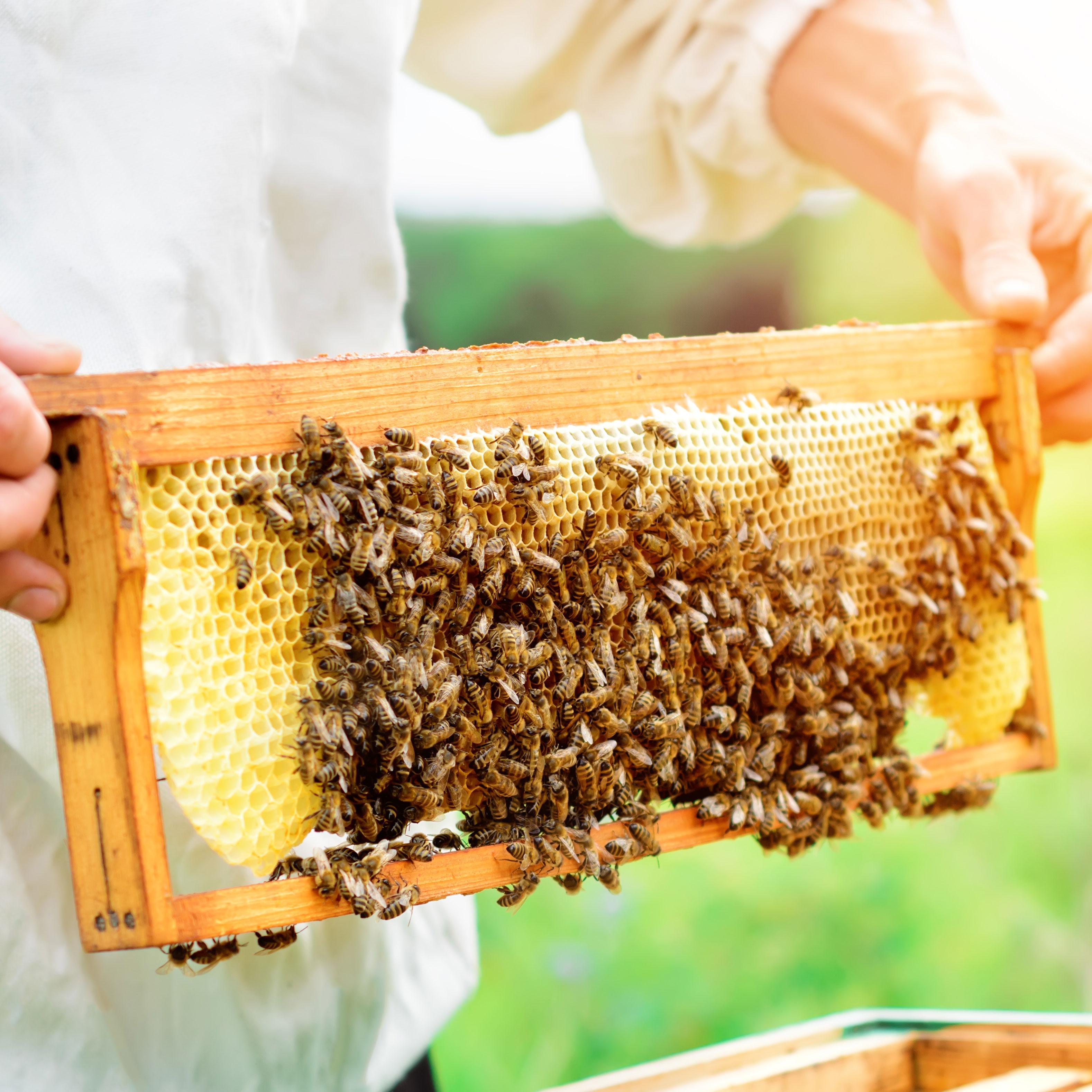K&N Honey fresh from the hive