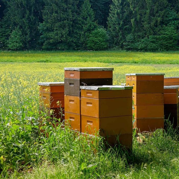 K&N Honey Apiary